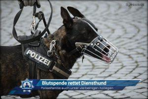 Polizeifamilie auch unter vierbeinigen Kollegen: Blutspende rettet Diensthund