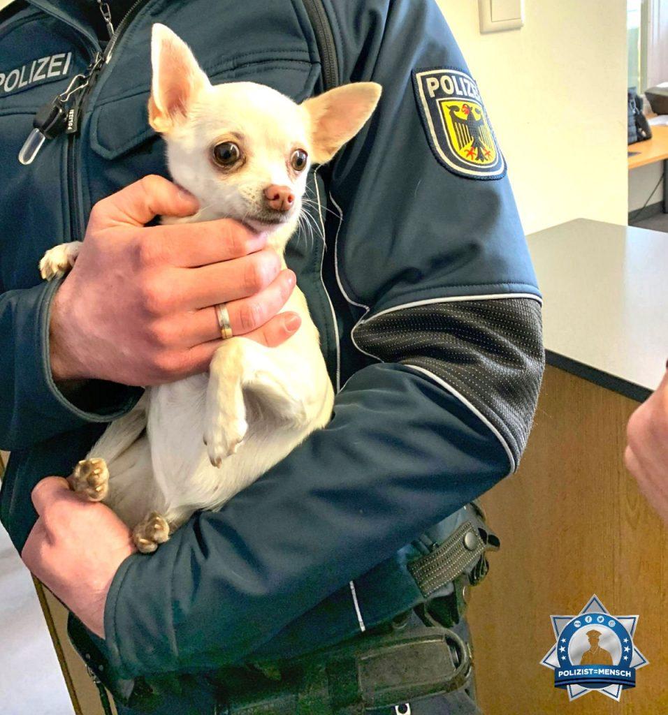 """""""Liebe Grüße vom Bundespolizeirevier Mühldorf am Inn, wir hatten einen Fundhund auf der Dienststelle. ☺️ Patrick und Tristan"""""""