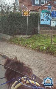 Ponykutsche mit wahnsinniger Geschwindigkeit