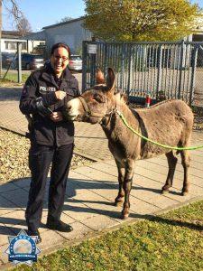 """""""Darf ich mein Haustier mitbringen?"""": Ein Esel auf der Polizeiwache"""