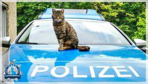 Polizeikatze Dreißig: Katzendame fand vor über zehn Jahren neues Zuhause auf Polizeidienststelle