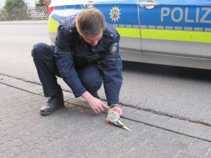 Polizisten bekommen einen Vogel: Zugriff an der Bordsteinkante