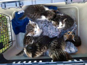 Süße Tierrettung: Katzenkinder hielten sich im Gleisbett auf