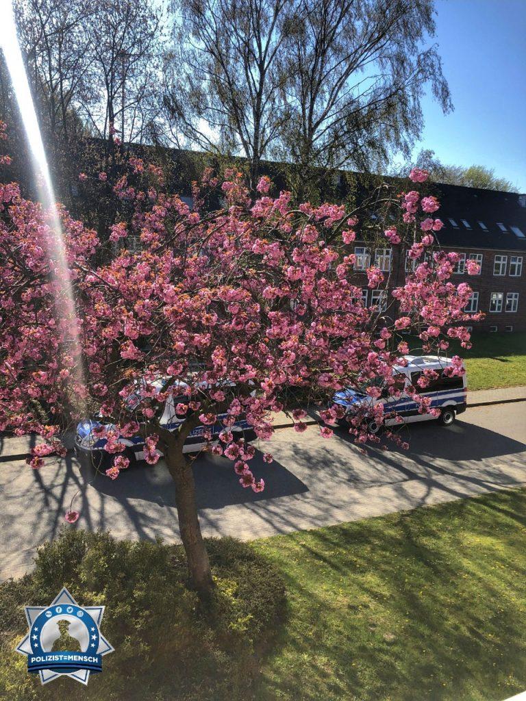 """""""Liebe Grüße aus der Polizeischule in Eutin von Lara ☺️ Hier blühen diese wunderschönen Bäume direkt vor den Stuben, bringt direkt Frühlingsgefühle."""""""
