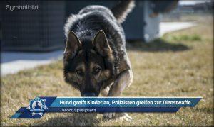 Tatort Spielplatz: Hund greift Kinder an, Polizisten greifen zur Dienstwaffe