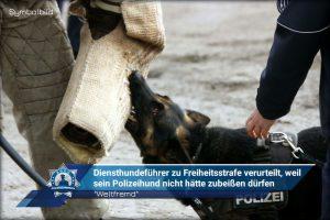 """""""Weltfremd"""": Diensthundeführer zu Freiheitsstrafe verurteilt, weil sein Polizeihund nicht hätte zubeißen dürfen"""