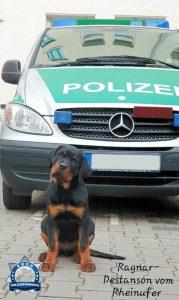 Nachwuchsförderung beim Polizeipräsidium Mannheim