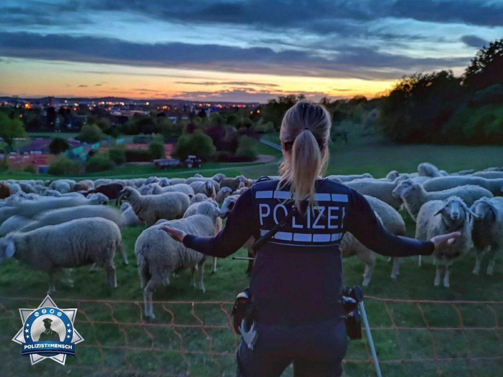 """""""Wir haben die Herde im Griff 😉 Liebe Grüße aus dem Dienst in Crailsheim. M & J"""""""