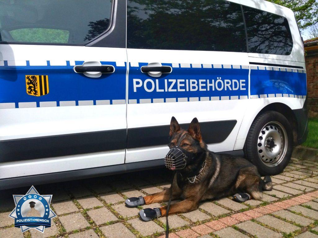 """""""Grüße von Nick, Diensthund bei der Polizeibehörde Dresden."""""""