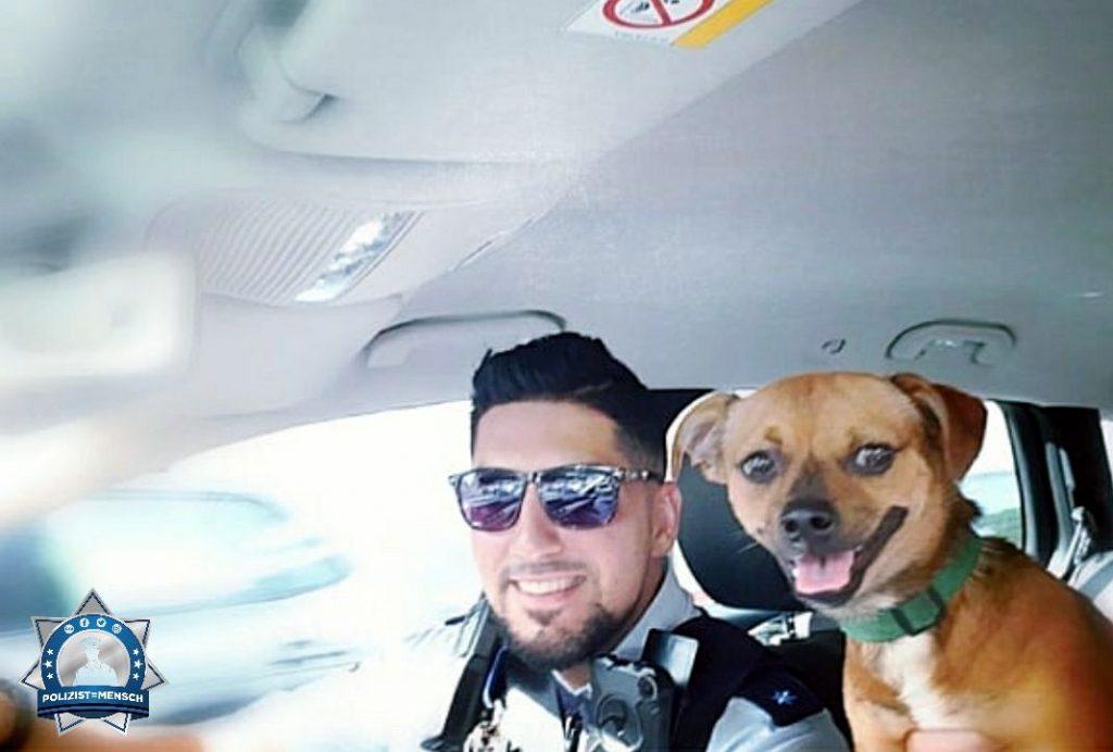 """""""Hundi aus Auto gerettet. Gaben ihm den Namen Rudi. Lasst bei diesen Temperaturen eure Süßen nicht im Fahrzeug! LG aus Mannheim, Salah"""""""