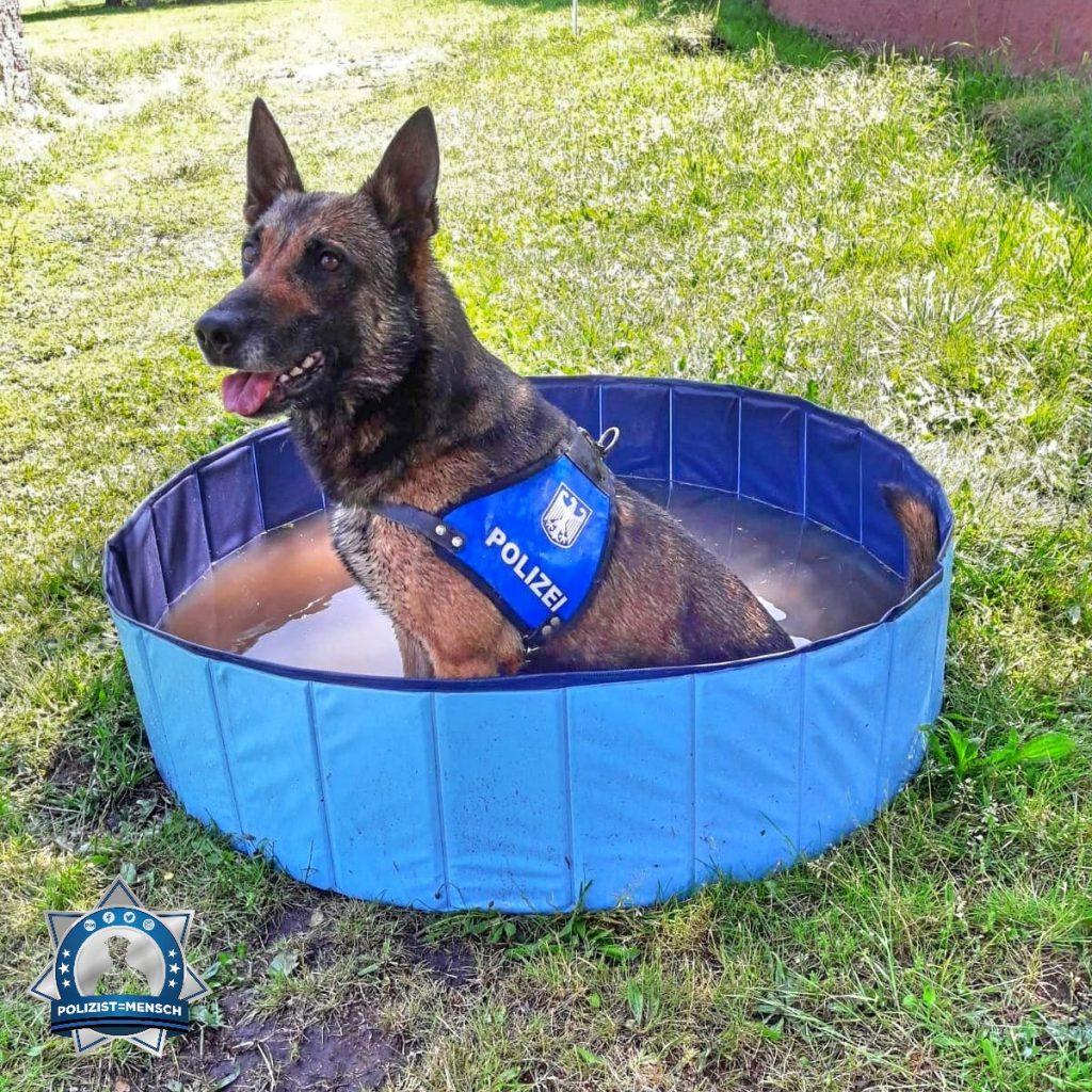 """""""Bei dem Wetter: Abkühlung für Diensthund Uzzo von der Bundespolizei"""""""