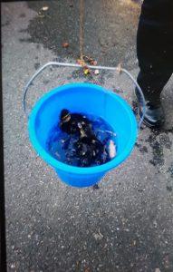 Der Polizeibericht im Original: Polizei angelt Entenküken aus Gulli