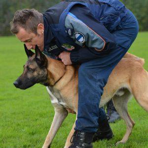 Sieben Jahre im Einsatz: Polizeihund Lennox geht in den Ruhestand
