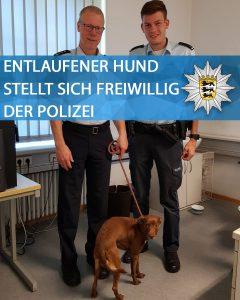 Hund aus Tierheim entlaufen: Fellnase stellt sich bei der Polizei (unter die Dusche)