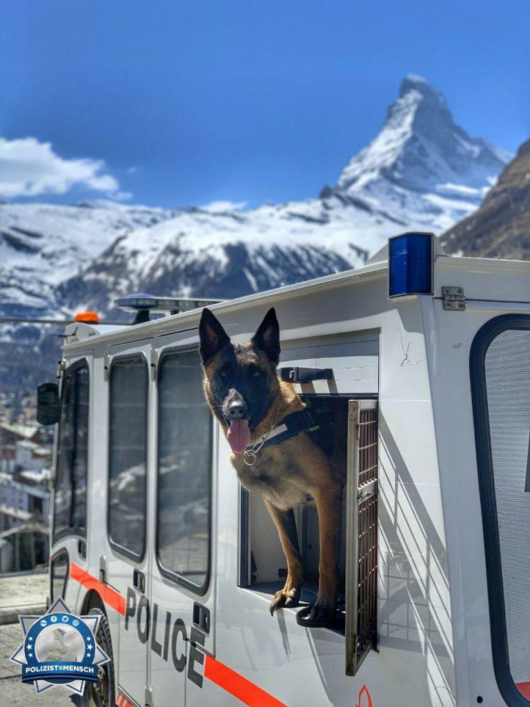 """""""Viele Grüße von Diensthund Q'u von der Regionalpolizei Zermatt (Schweiz)"""""""