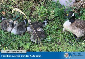 """Der Polizeibericht im Original: """"Familienausflug"""" auf der Autobahn - Eltern uneinsichtig"""