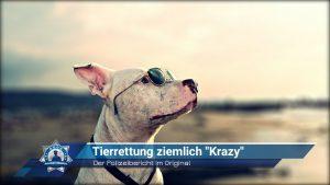 """Der Polizeibericht im Original: Tierrettung ziemlich """"Krazy"""""""