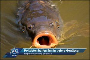Karpfen auf Grund gelaufen: Polizisten halfen ihm in tiefere Gewässer