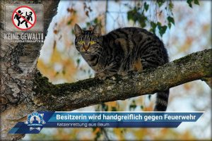Katzenrettung aus Baum: Besitzerin wird handgreiflich gegen Feuerwehr