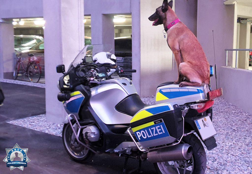 """""""Diensthündin Centa im Praktikum bei der Motorradstaffel 😉 Liebe Grüße aus Augsburg"""""""