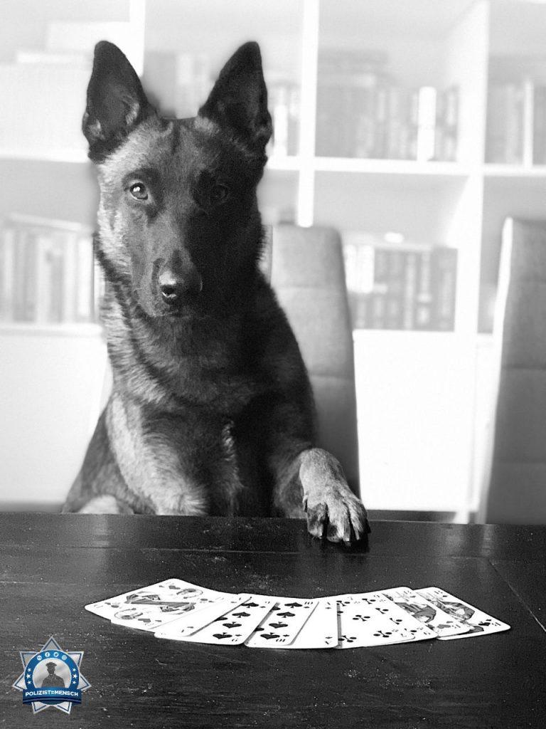Wer sich schon immer fragte, was Diensthunde in ihrer Freizeit machen, dem zeigt Buni aus Berlin, dass er sein Pokerface schon perfekt beherrscht 😶