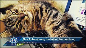 Katzenmusik: Eine Ruhestörung und eine Überraschung