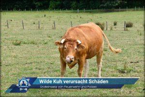 Großeinsatz von Feuerwehr und Polizei: Wilde Kuh verursacht Schäden