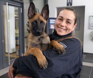 Polizei Bonn stellt neuen vierbeinigen Kollegen vor: Der Partner mit der kalten Schnauze