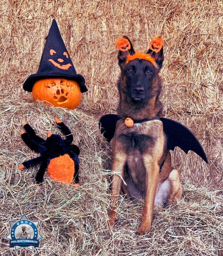 """""""Ok, Freunde, ich bin bereit. Der Spuk kann beginnen. Schönes Halloween euch allen! Grüße aus Berlin von Diensthund Buni 🐾 🎃"""""""