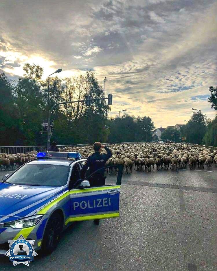 """""""Gemeinsam mit einem Hirten haben wir heute 900 Schafe durch Freising geführt 🐑 Gaffen ausnahmsweise erlaubt 😅 Viele Grüße von Mona, Moritz, Eva und Ferdinand"""""""