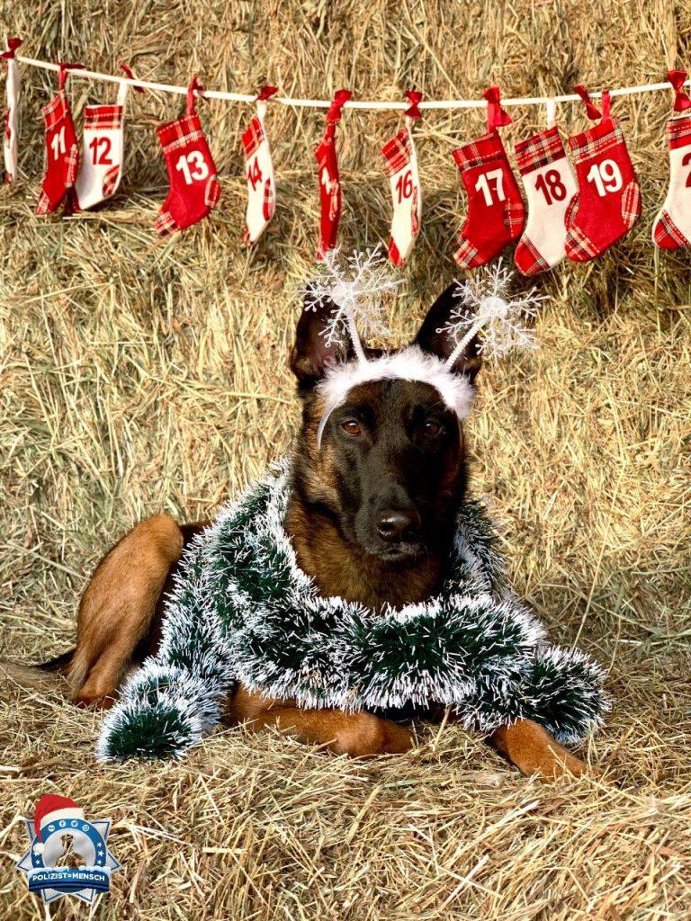 """""""Nach Weihnachten ist vor Weihnachten. Santa Buni passt auf euch auf und wird dem Weihnachtsmann berichten 😉"""""""
