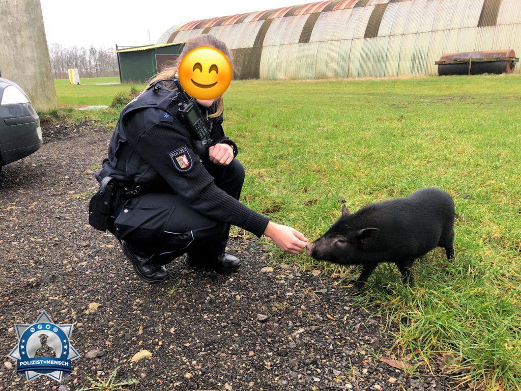 Einsatz der anderen Art: Schwein gehabt
