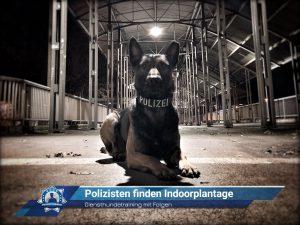 Diensthundetraining mit Folgen: Polizisten finden Indoorplantage