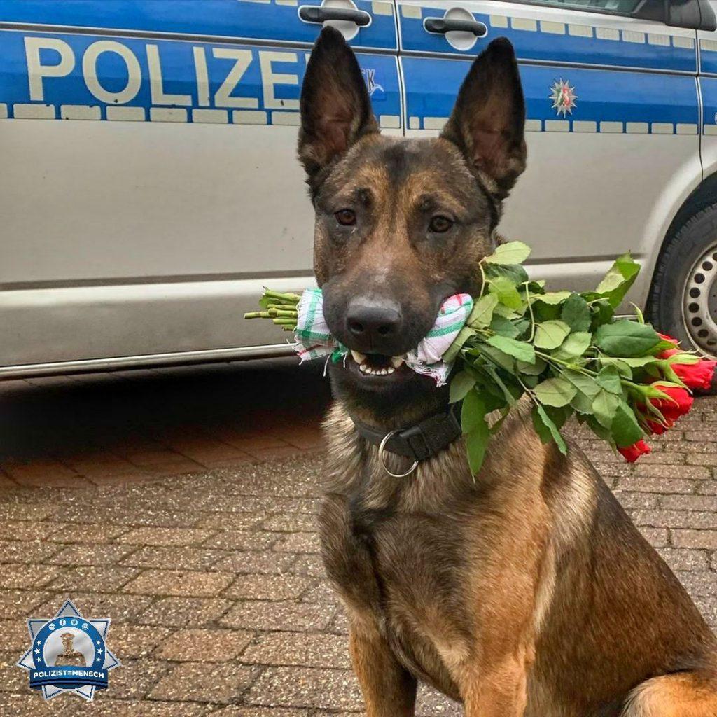 """""""Eine Karte kann ich zwar nicht schreiben, aber mit roten Rosen dürfte ich auch richtig liegen 🌹 😉 Allen einen schönen Valentinstag von Diensthund Ramsey!"""""""