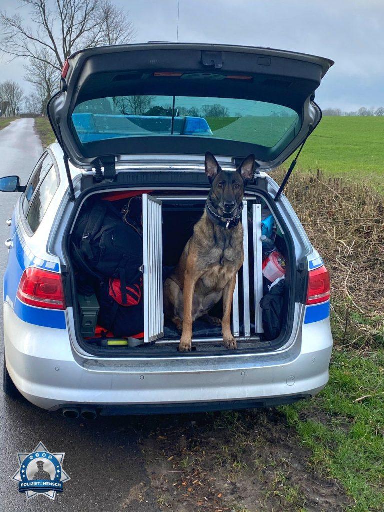 """""""Sprengstoffspürhund Larry grüßt euch aus dem Frühdienst bei der Polizei Bad Oldesloe in Schleswig-Holstein 🐾 Ich bin die wachsame Nase des Gesetzes."""""""