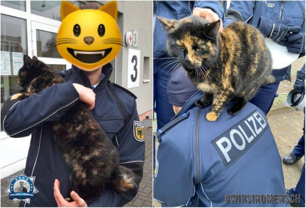 """""""Grüße aus Rheinland-Pfalz von Can und von der Katze! 🙂 Mal etwas um vom ganzen Stress und dem Virus abzulenken und euch ein Lächeln ins Gesicht zu zaubern! 😄"""""""