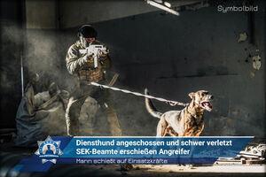 Mann schießt auf Einsatzkräfte: Diensthund angeschossen und schwer verletzt