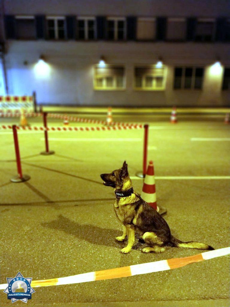 """""""Tierische Grüße von der Nachtschicht an der Schweizer Grenze. Rex kontrolliert auch gern mal die Einreise nach Deutschland."""""""