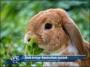 Trotz gutem Ausgang, ungelöster Fall: Dieb bringt Kaninchen zurück