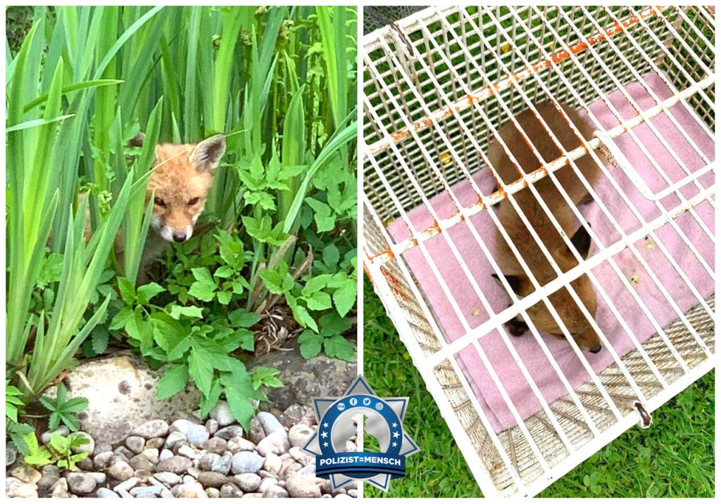 Rettung eines Fuchsbabys