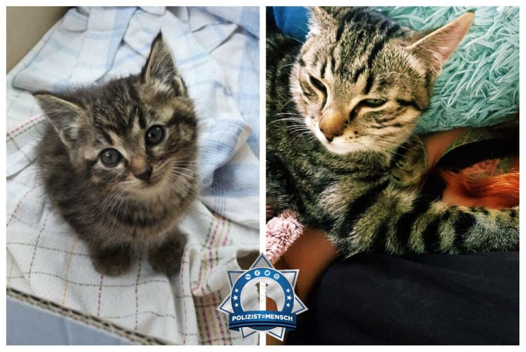 Ein Herz für Tiere: Fundkatze findet neues Zuhause