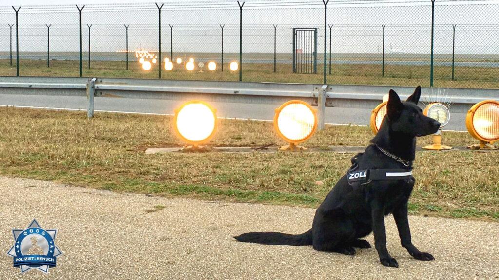 """""""Das ist die Zoll-Hündin Nala aus Konstanz, ein Passiv-Rauschgift-Spürhund, welcher an Personen sucht (die Nachfolgerin von Rambo vom Bajohr), hier am Flughafen Frankfurt."""""""