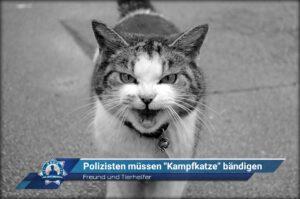 """Freund und Tierhelfer: Polizisten müssen """"Kampfkatze"""" bändigen"""