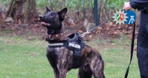 Spürnasen im Einsatz: Fünf Fakten über Diensthunde beim Polizeipräsidium Bochum