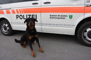 Nach Einbruch: Diensthund schnappt flüchtigen Einbrecher - und schnappt dann zu