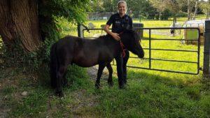 Pony ausgebüxt: Liebe auf Abwegen?