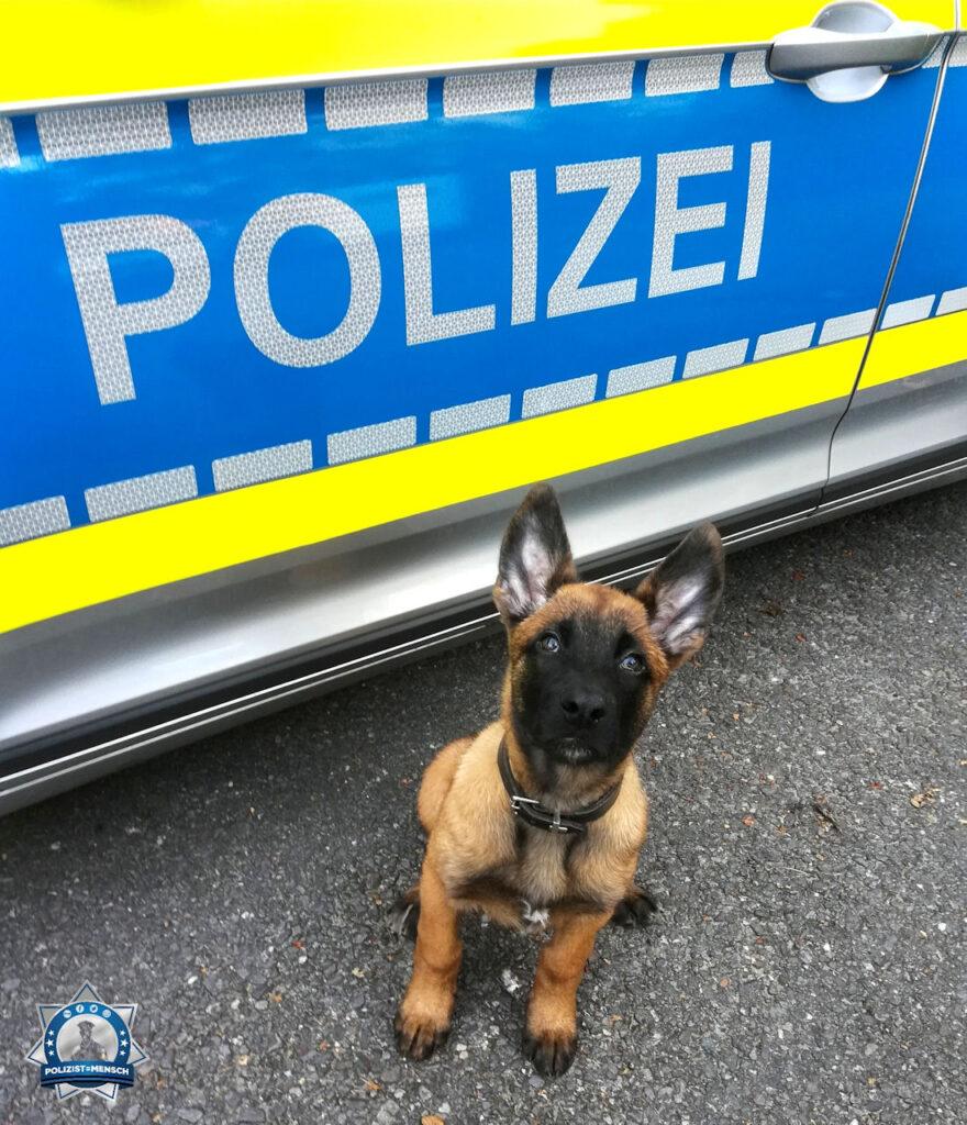 """""""Viele Grüße aus Niedersachsen von Diensthundazubi Groll und Diensthundführerin Hannah."""""""