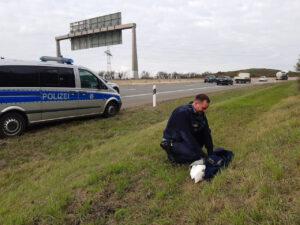 Tierrettung auf der Autobahn: Schwan im Glück