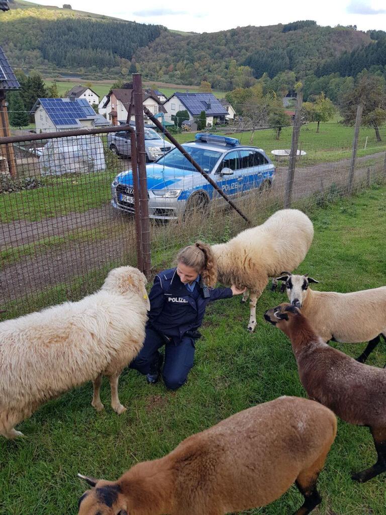 Die Begrüßung der Schafe ❤️ fällt sehr herzlich aus
