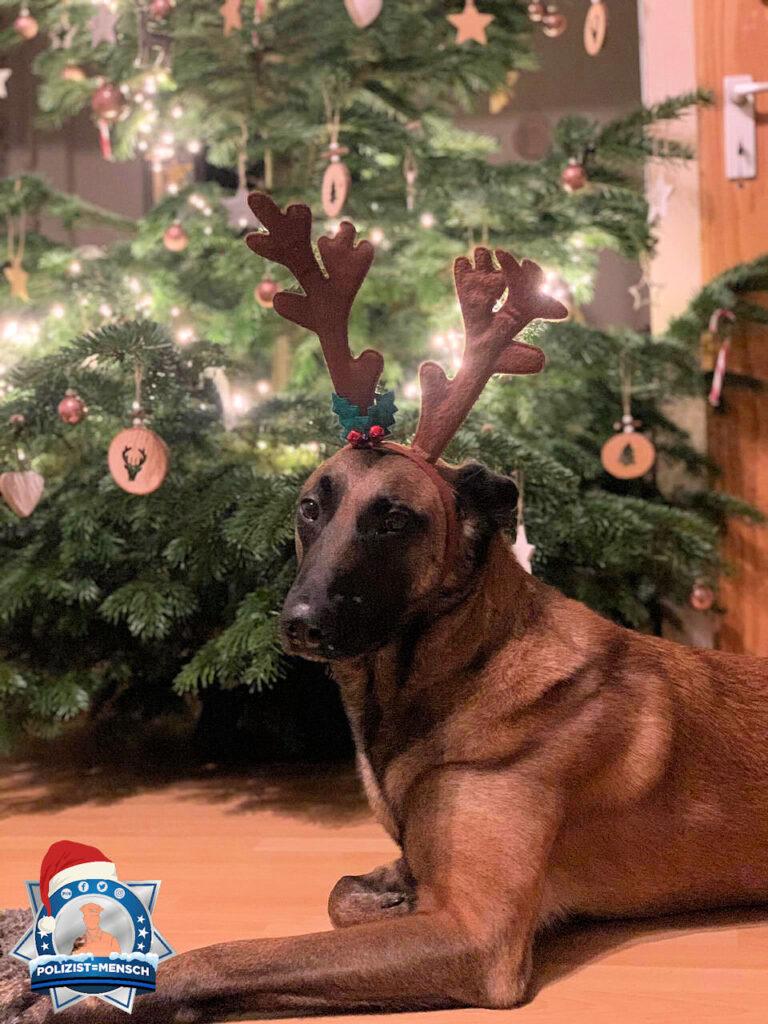 Macht Diensthund Karl-Heinz ein Rentierpraktikum? Was meint ihr?